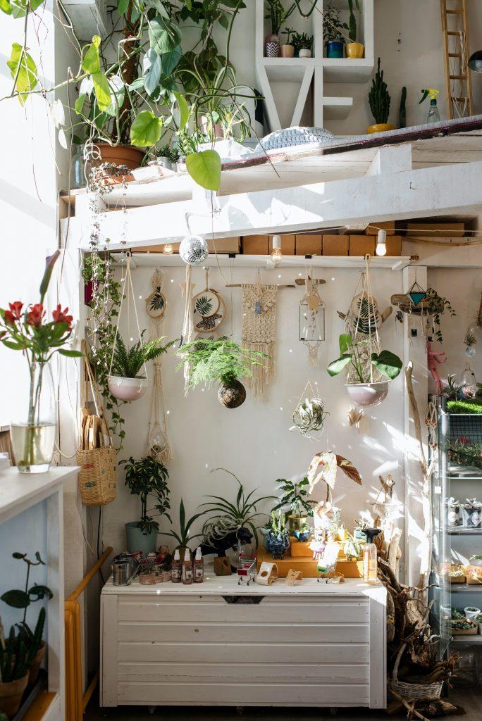 Plant Aesthetics