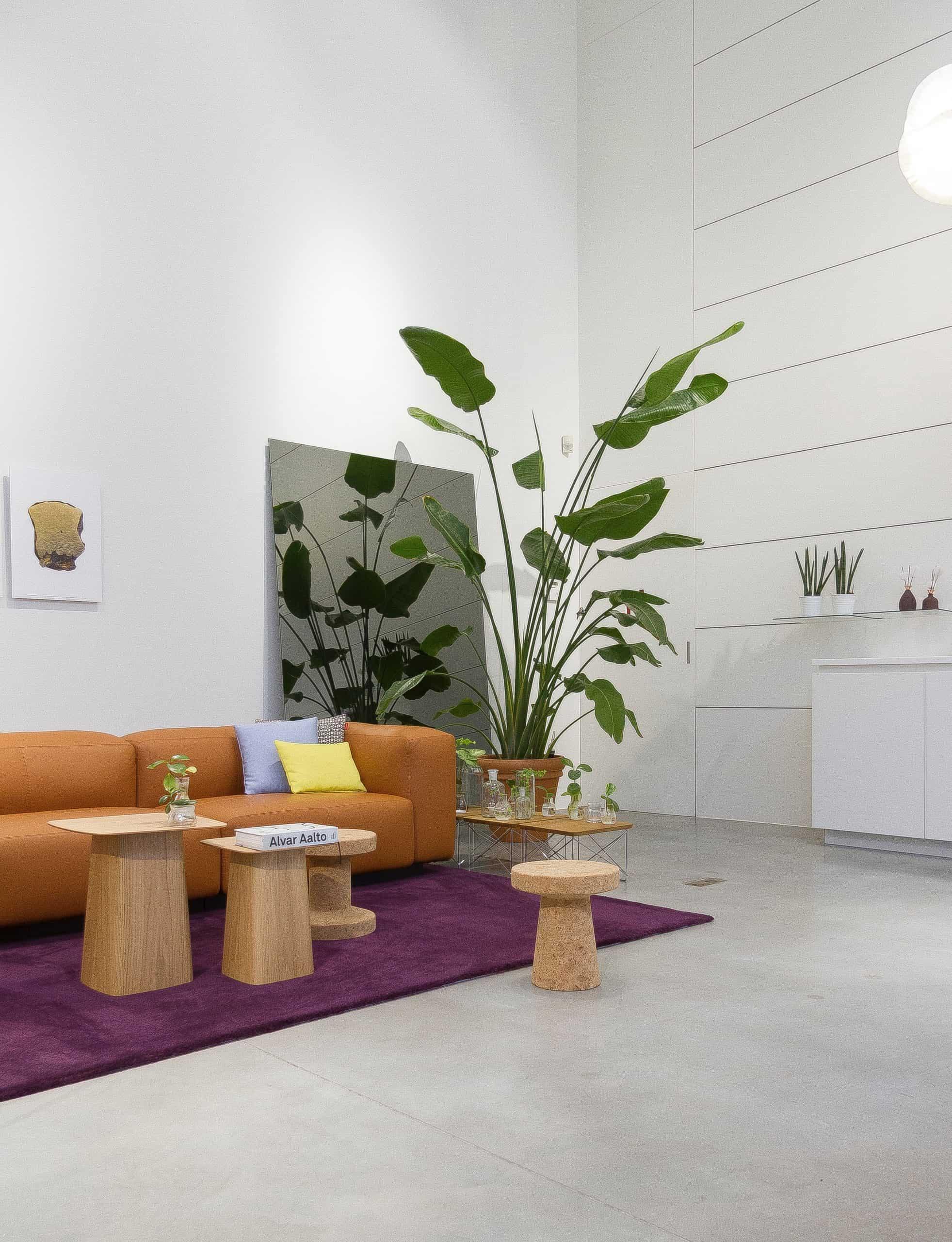 biophilic interior aesthetics